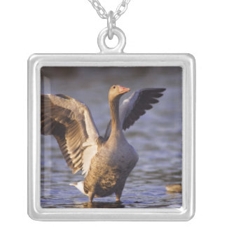 Greylag Goose, Anser anser, adult with young, Silver Plated Necklace