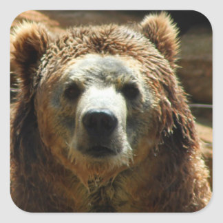 Grizzly Bear Chilling Square Sticker