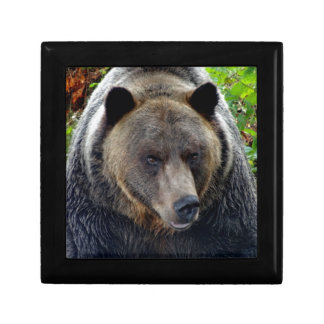 Grizzly Bear Close-up Gift Box