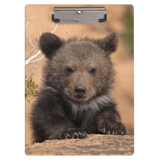 Grizzly Bear Cub Clipboard