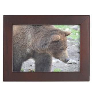 Grizzly Bear Keepsake Box