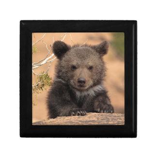 Grizzly bear (Ursus arctos horribilis) Gift Box