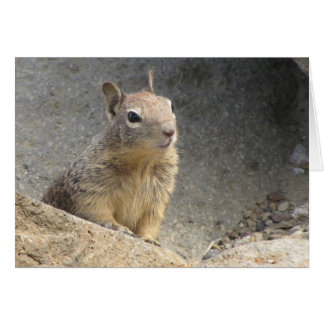 Ground Squirrel Card