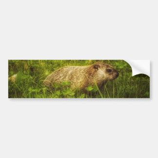 Groundhog in a field bumper sticker