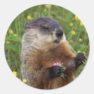 Groundhog Pose Sticker - Closer