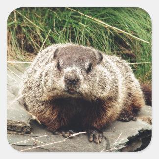 Groundhog Square Sticker