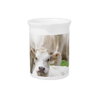 Group of white beige cows posing in meadow pitcher