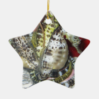 Group of Yellow-Green, Brown & White Sea Horses Ceramic Star Decoration