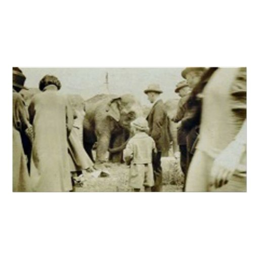 group with elephants poster