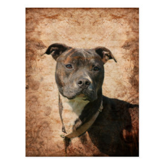 Grunge Pit Bull Terrier Postcard