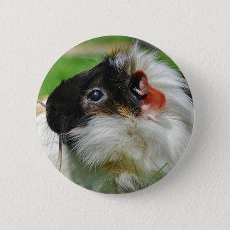 Guinea pig Chewie 6 Cm Round Badge