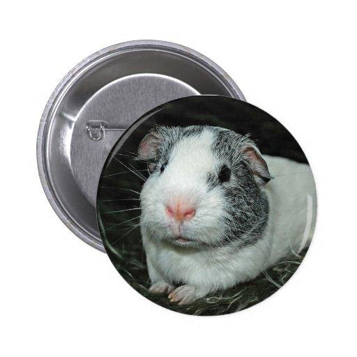 Guinea pig Morgan Pinback Button