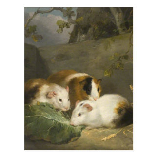 Guinea Pigs by George Morland Postcard
