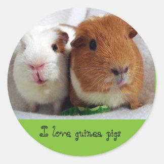 guinea pigs stickers