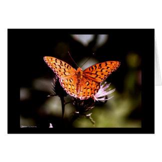 Gulf Fritillary Butterfly Note Card