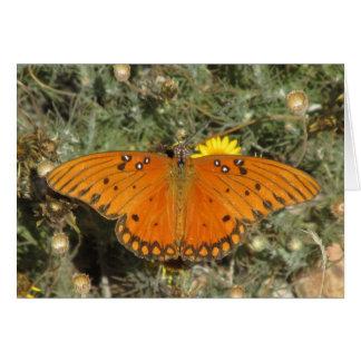 Gulf Fritillary Butterfly Cards