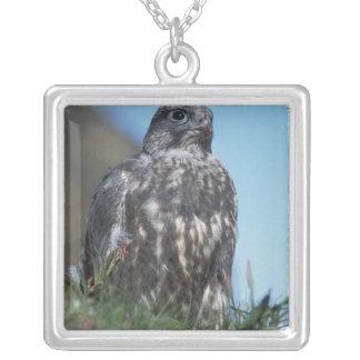 gyrfalcon, Falco rusticolus, juvenile getting 2 Silver Plated Necklace
