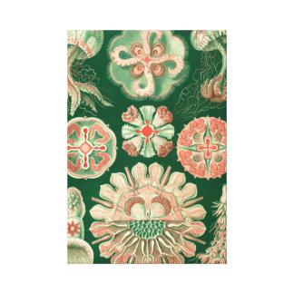 Haeckel Discomedusae Canvas Print