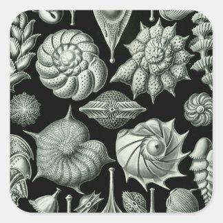 Haeckel Thalamophora Square Sticker
