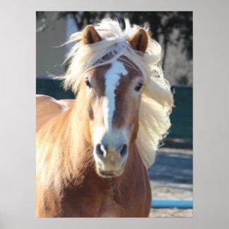 Haflinger Horse Print