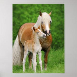 Haflinger Horses Cute Foal Kiss Mum Animal Photo Poster