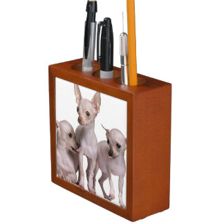 Hairless Chihuahua (5 and 7 months old) Desk Organiser