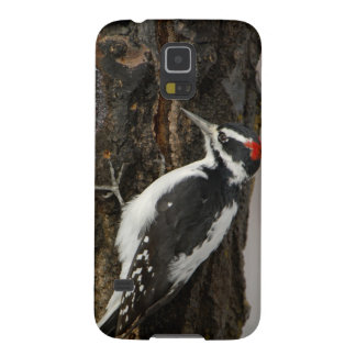 Hairy Woodpecker male on aspen tree, Grand Teton Galaxy S5 Cover