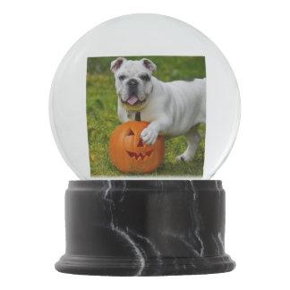 Halloween bulldog snow globes