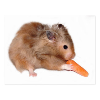 Hamster diet card postcard