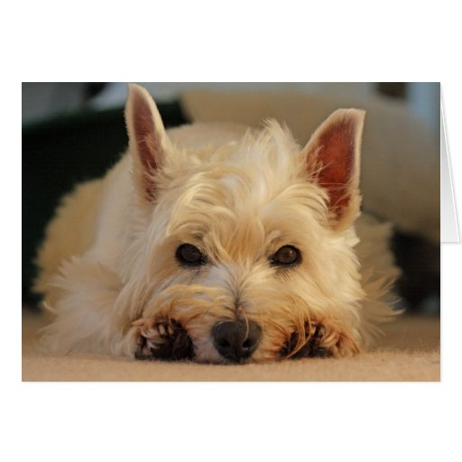 Happy Birthday Card - Westie Card