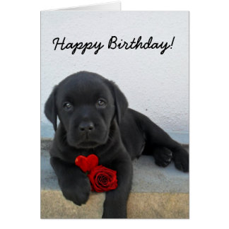 Happy Birthday Labrador Retriever greeting card