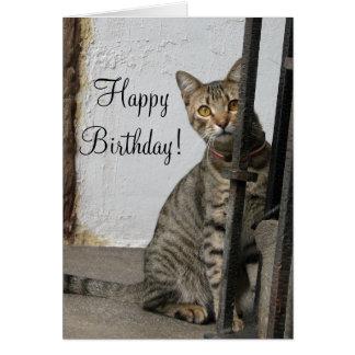 Happy Birthday Tabby cat greeting card