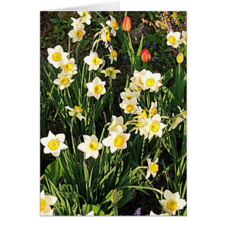 Happy Easter / Spring Greeting Card