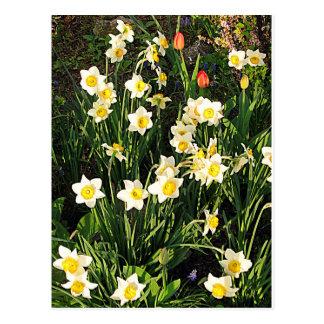 Happy Easter / Spring Postcard