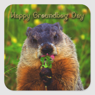 Happy Groundhog Day Eating Flower Square Sticker