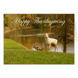 Happy Thanksgiving, albino stag by lake. Card