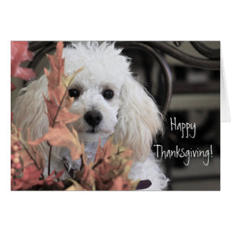 Happy Thanksgiving Poodle dog card