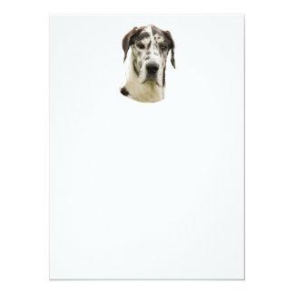 Harlequin Great Dane Portrait Photo Card