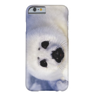 Harp seal pup ice Gulf of St. Lawrence, Barely There iPhone 6 Case