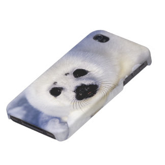 Harp seal pup ice Gulf of St. Lawrence, iPhone 4/4S Cover
