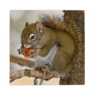 Harriman State Park, Idaho. USA. Red Squirrel Wood Coaster