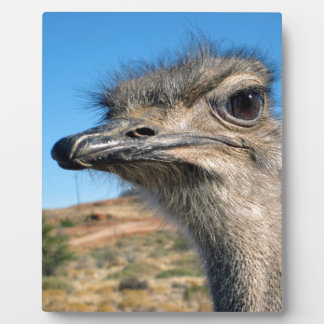 Harry the Happy Ostrich Plaque