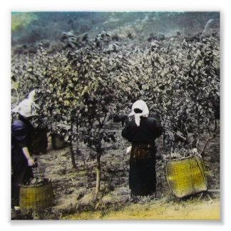 Harvesting Silk in Old Japan Vintage Japanese Farm Photographic Print
