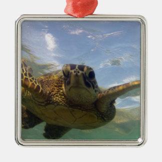 Hawaii Green Sea Turtle Silver-Colored Square Decoration