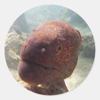 Hawaii Moray Eel Classic Round Sticker
