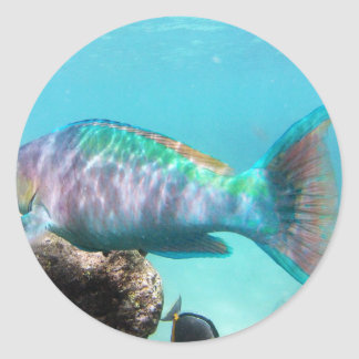 Hawaii Parrot Fish Classic Round Sticker