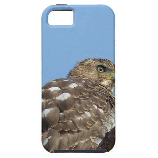 hawk iPhone 5 cover