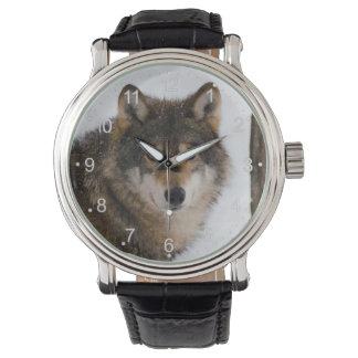 Head wolf - american wolf - brown wolf watch