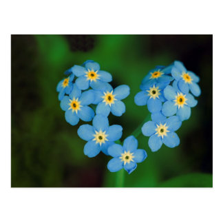 Heart Shaped Forget-me-not Flowers Postcard
