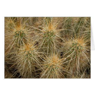 Hedgehog cactus in desert habitat greeting card